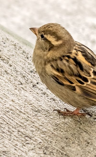 Small sparrow bird sitting on a wooden stairs
