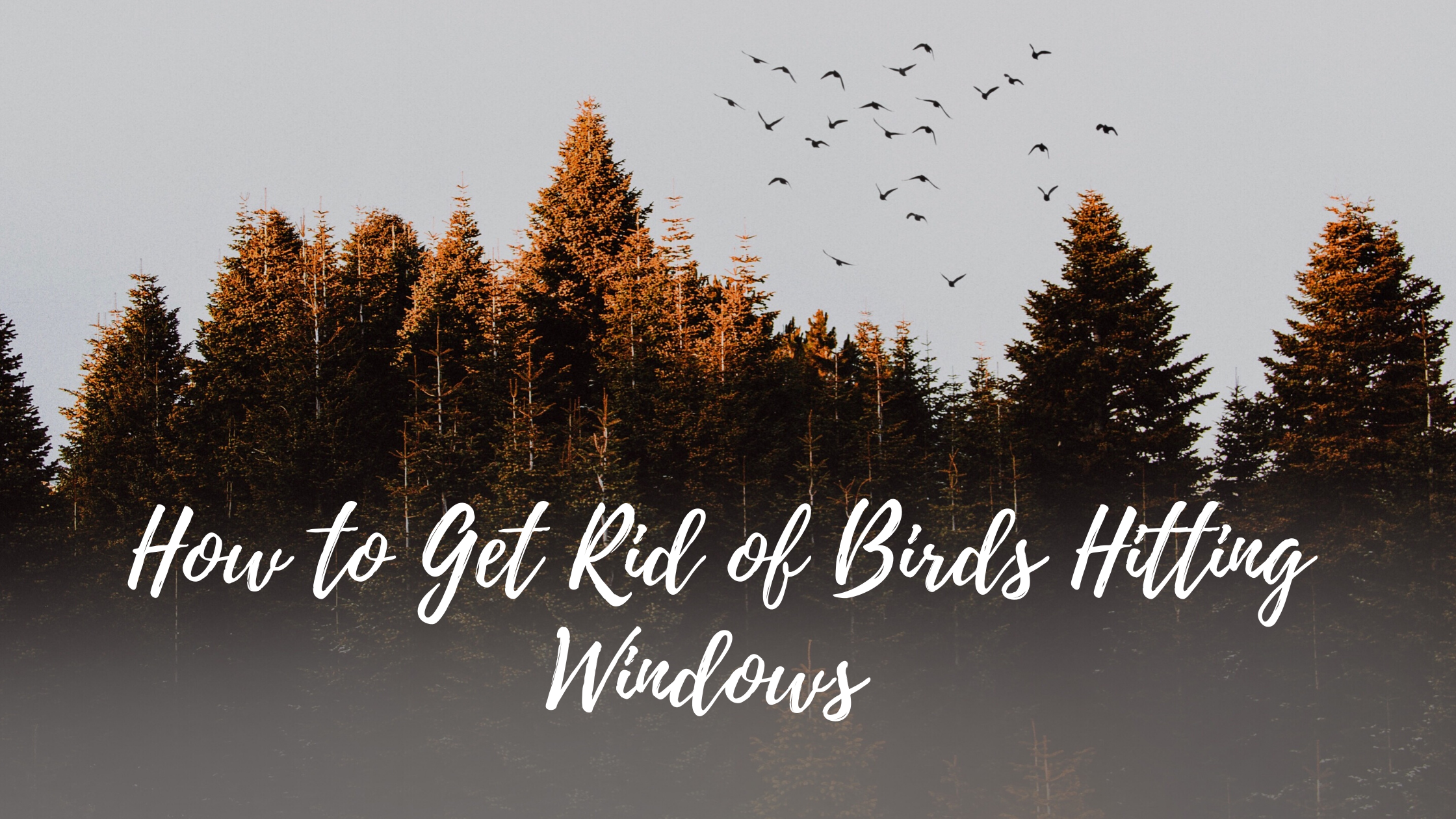 How to Get Rid of Birds Hitting Windows in Colorado Springs